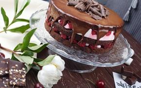 Картинка шоколад, клубника, торт, пион