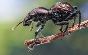 Картинка жук, ветка, насекомое, долгоносик