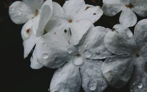 Картинка цветок, макро, капелька