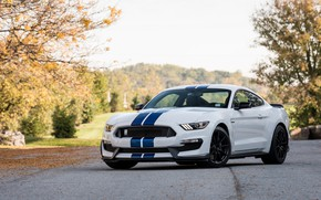 Картинка Shelby, Blue, White, GT350, Strips