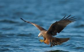 Картинка море, природа, птица
