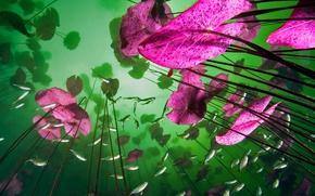 Картинка листья, рыбы, краски, растения, Мексика, пещера, Aktun Ha, Кинтана-Роо, Тулум