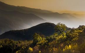 Обои горы, осень, деревья, туман