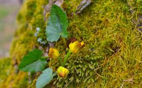 Картинка Природа, Весна, Цветочки, Nature, Flowers, Spring