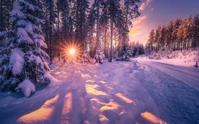 Обои лучи, снега, зима, природа, дорога, деревья, ели, солнце, пейзаж
