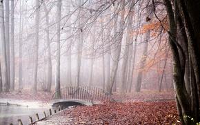 Обои осень, мост, парк, туман