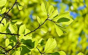 Картинка листья, Природа, солнышко, веточки