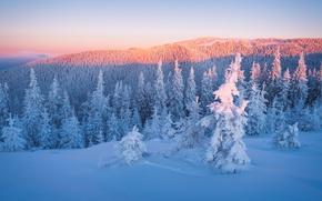 Картинка зима, лес, небо, облака, свет, снег, пейзаж, закат, горы, ветки, рассвет, холмы, красота, ели, освещение, …