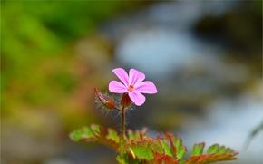 Картинка Весна, Spring, Боке, Bokeh, Розовый цветок, Pink flower