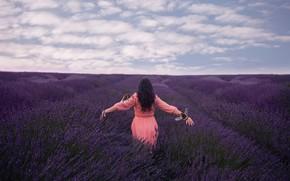 Обои лаванда, девушка, поле, Lichon, пчёлы