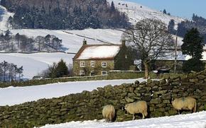 Картинка Зима, Снег, Деревня, Winter, Snow, Village, Бараны