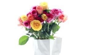 Картинка розы, бутоны, разноцветный