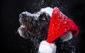 Обои снег, собака, Новый Год, Рождество, Christmas, dog, 2018, Merry Christmas, Xmas, funny, cute, decoration, santa ...