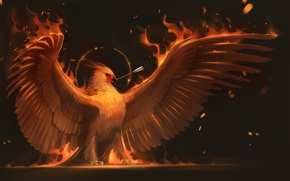 Обои огонь, птица, крылья, арт, стрела, феникс, phoenix