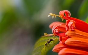 Картинка цветок, макро, лист, муравей, Eleonora Di Primo