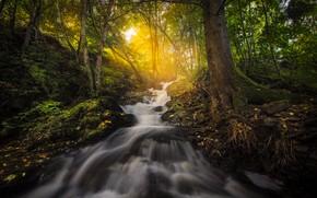 Картинка осень, лес, свет, река