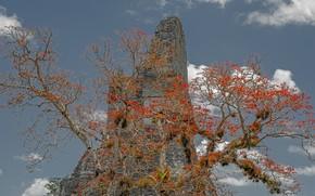 Картинка скала, дерево, Гватемала, Тикаль