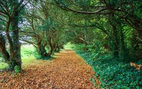 Картинка осень, лес, деревья, парк