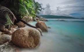 Обои море, пальмы, побережье, камень
