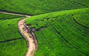 Картинка дорога, зелень, камни, поля, солнечно, вид сверху, плантации, Шри-Ланка, Nuwara Eliya