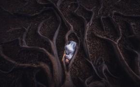 Картинка девушка, корни, дерево, листва