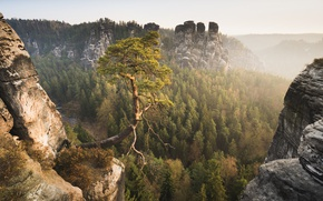 Обои лес, горы, Германия, Germany, сосна, Саксонская Швейцария, Saxon Switzerland, Эльбские Песчаниковые горы, Elbe Sandstone Mountains