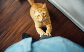 Картинка кот, смотрит, рыжий, глаза, кошка