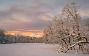 Картинка зима, снег, деревья, горы, Норвегия, Norway, Troms, Тромс, Квефьорд, Kvæfjord kommune, Storjord