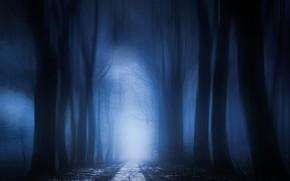 Картинка дорога, осень, лес, деревья, туман