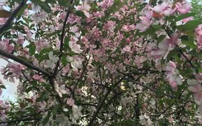 Картинка Цветы, Природа, Дерево, Цветок, Растение, Флора