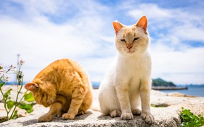 Обои фон, коты, лето