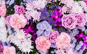 Картинка цветы, розы, астра, гвоздика