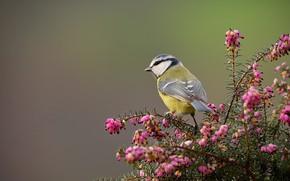 Картинка Цветы, Природа, Птица, Куст