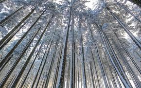 Обои деревья, осень, лес