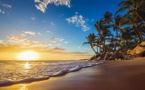 Картинка море, волны, закат, природа, тропики, пальмы, побережье