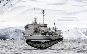 Картинка iceberg, Antarctica, humpback whale, expedition ship, Akademik Ioffe