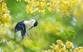 Картинка ветки, тропики, птица, Тайвань, цветение, FuYi Chen