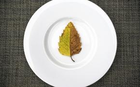 Картинка лист, тарелка, ткань