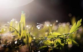 Обои цветок, свет, природа