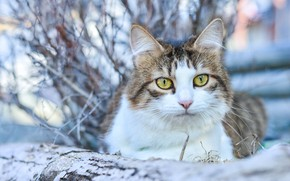 Картинка кошка, кот, взгляд, боке, котейка