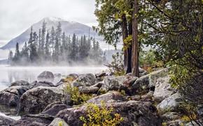 Картинка лес, камни, берег озера
