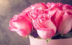 Обои букет, розы, розовые