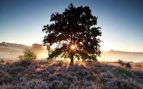Обои поле, лето, небо, трава, солнце, цветы, туман, дерево, рассвет, утро, луг