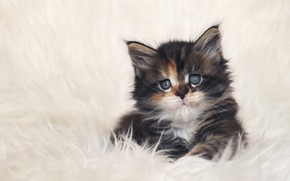 Картинка кот, фон, котёнок