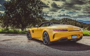 Картинка car, Roadster, Mercedes, logo, yellow, vegetation, Mercedes Amg, Mercedes Amg Gt Roadster, Mercedes Amg Gt