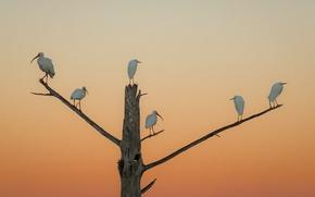Картинка закат, птицы, дерево