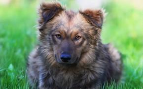 Картинка друг, собака, травка, дворняга