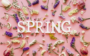 Картинка цветы, фон, розовый, весна, pink, flowers, spring, purple