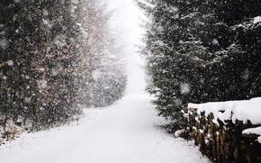Обои зима, лес, снег, дрова