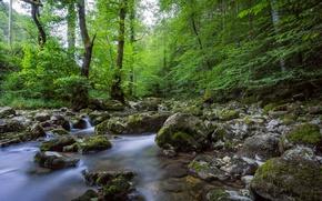 Картинка лес, вода, деревья, камни